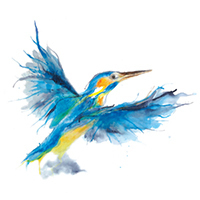 kingfisher3(sold)