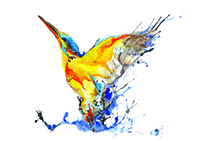 kingfisher2(Sold)