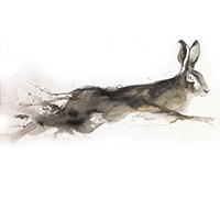 hare2015(sold201610)